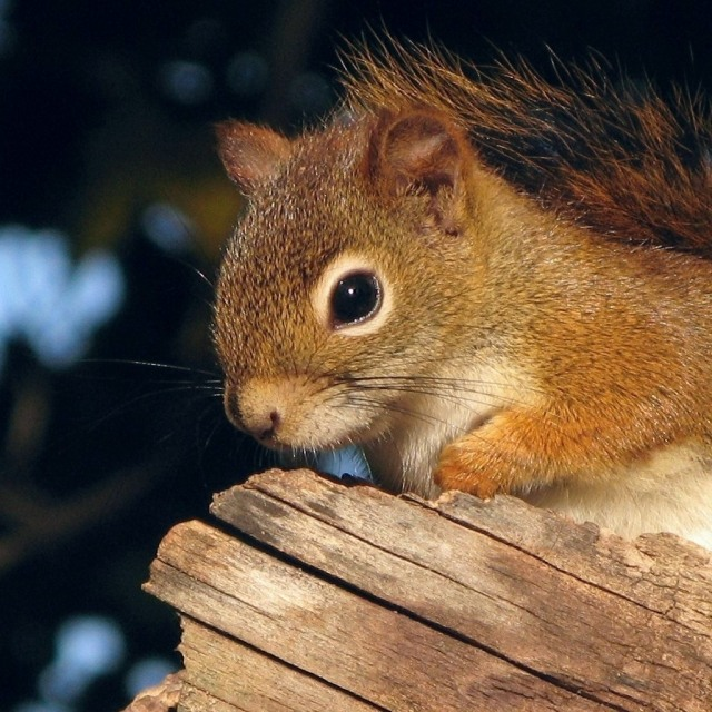 Top-30-cute-pics-of-Squirrel-20